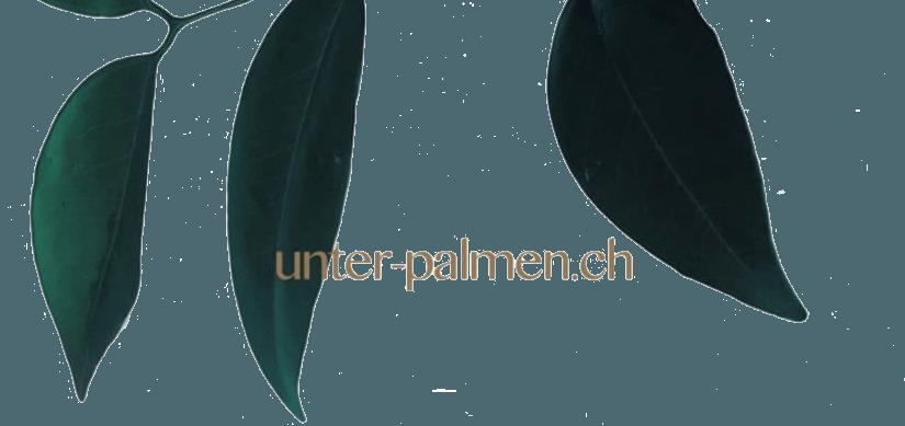 Unter-Palmen.ch